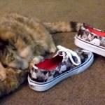 靴に寄り添い猫まみれ、猫柄シューズにゴロゴロと