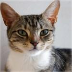 本日の美人猫vol.145