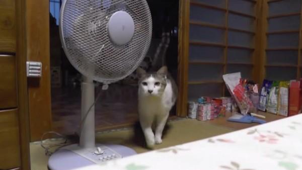 150725cattail 600x338 - 知らぬ間に横を向きたる扇風機、犯人まさかの猫シッポ