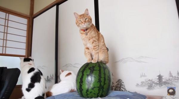150730catonwatermelon01