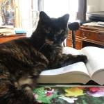 「猫と一緒に暮らすスキル」を高める講座、渋谷にて開催中