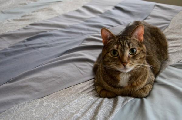 150807cat 600x397 - 本日の美人猫vol.148