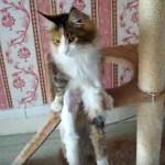 人間風に腰掛ける猫、意外な足長っぷりを見せつける