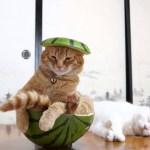 サザエさんのタマのアレ、リアルに猫がやるとこうなる