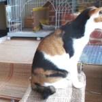 日なたに寝転ぶ猫を眺める、猫部屋の定点観測配信中