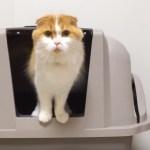掃除の手間が「引くだけ」に、レバー式の半自動猫トイレ