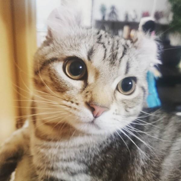 150921KEMO 600x600 - 本日の美人猫vol.156