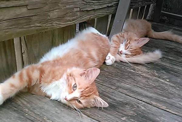 150924swimmingcats 600x402 - 湖泳いだ子猫のその後、2匹仲良く里親の家へ