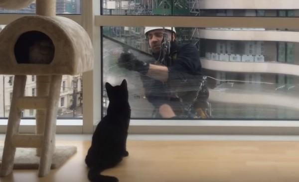 151019blackcat 600x366 - 窓拭き見つめる健気な黒猫、手を振るおじさん顔なじみ