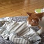 猫たちによる赤ん坊との初対面、怪しい動きに目を丸くする