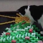 ドミノで作ったクリスマスツリー、猫が倒して見事に完成