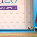 サミットと聞いて集まる3匹の猫、G20会場で猫集会を開催