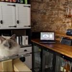フランスのナントの猫カフェ、Google Mapsインドアビューにて店内散歩