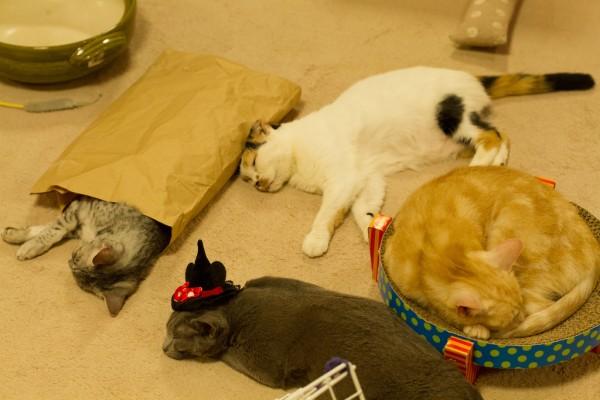 151127nekocafemap02 600x400 - 日本全国の猫カフェをマッピングした「全国猫カフェマップ」