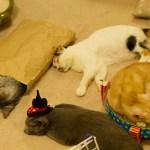日本全国の猫カフェをマッピングした「全国猫カフェマップ」