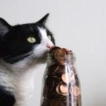 猫が助かるふるさと納税、保護猫飼い猫どちらにも