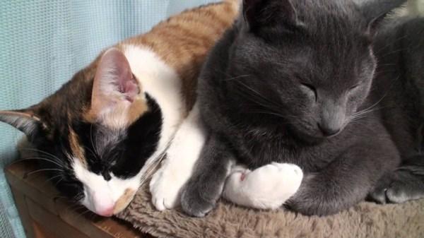 151213cats