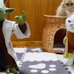 ヨーダと戦う猫戦士たち、多勢に無勢で優勢勝ち