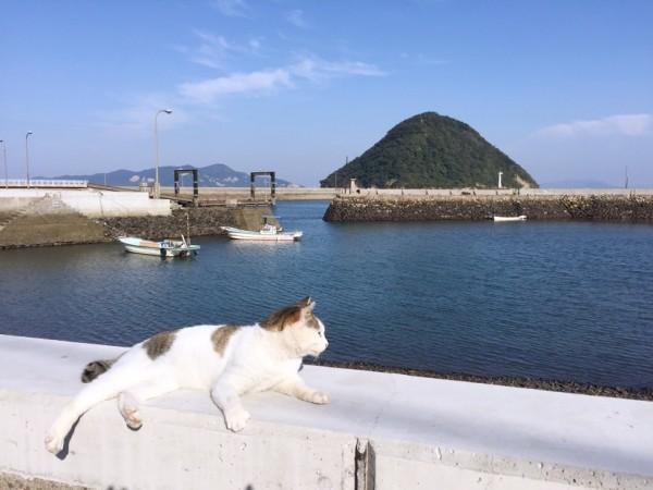 151226sanagineko_IMG_0916