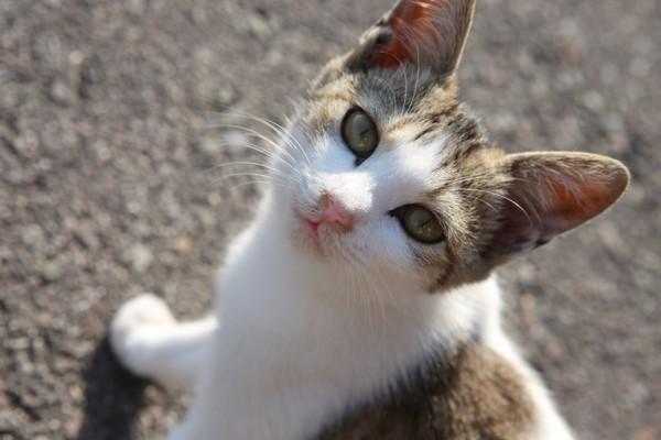"""151226sanagineko IMG 8031 600x400 - """"さなぎの猫""""の写真集で、香川の島が町おこしを目指す"""