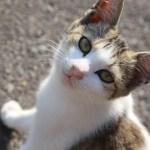 """""""さなぎの猫""""の写真集で、香川の島が町おこしを目指す"""