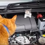エンジンルームの三毛猫救出、茶猫の声に誘われて