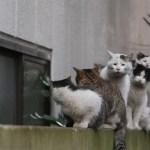 かわいい猫のレアな顔、ブサ顔集めた写真集
