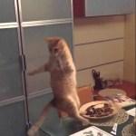 飛び回る虫を目がけて跳んだ猫、着地で思わぬ失態を見せる