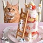 猫の日特製スイーツ、猫と苺のメイソンジャー