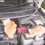 猫バンバンプロジェクト、約20匹の猫を救った模様