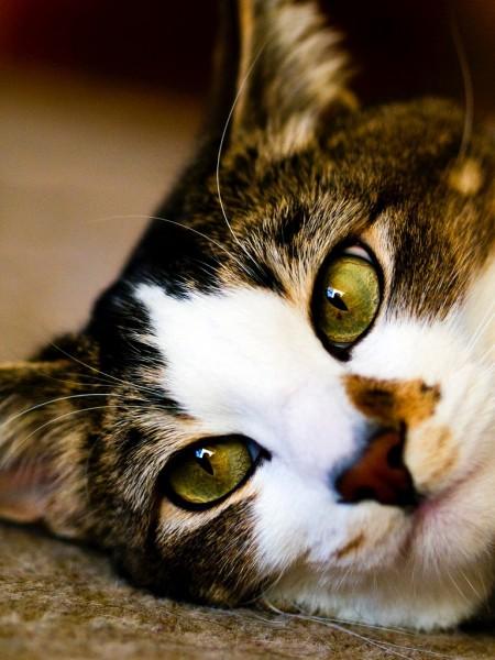 160312cat 450x600 - 本日の美人猫vol.177