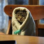 ずっと一緒にいてほしい、猫の写真を大募集。公式インスタ猫まみれ