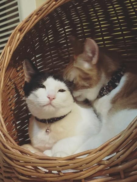 160319nekonkatsu 450x600 - 猫が導く縁結び、「ねこんかつパーティー」が猫カフェで26日開催