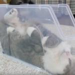 毛並み豊かにふくよかな猫、裏技使い一瞬でスリムに