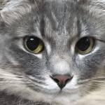 本日の美人猫vol.180