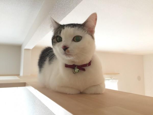 160328myuhouse01 600x450 - 猫が主役のマンション誕生、1棟丸ごと猫用フルリノベーション