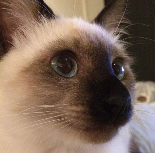 160404cat 600x592 - 本日の美人猫vol.181