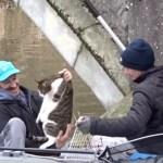 橋のたもとの救出劇、15か月ぶりに飼い主と再会する驚きの展開に
