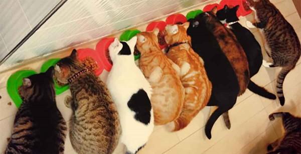 並んでご飯中の、ネコリパブリック心斎橋店の猫たち