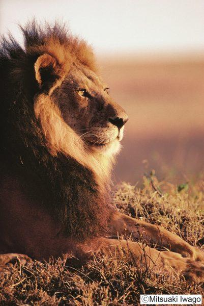160517nekolion02 401x600 - ネコライオン展今年も開催、三越本店猫イベ満載