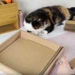材料はお菓子の箱と段ボール、猫の爪とぎDIY