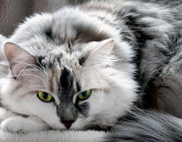 160610catseye 600x467 - 本日の美人猫vol.191