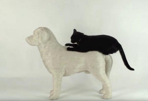160610dogandcat