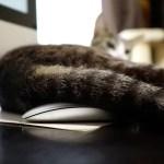 仕事をさせぬと頑張る猫、マウスに乗る手を追い払い