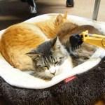 ラジコンユンボの猫マッサージ、意外な刺激に目を細め