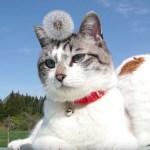 タンポポの光背きらめく微笑む猫、神々しさに綿毛も揺れる