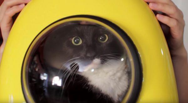 160710TheBubbleBackpack 600x329 - 宇宙船型猫バッグ、4匹の猫による乗り心地レビュー