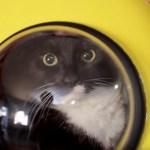 宇宙船型猫バッグ、4匹の猫による乗り心地レビュー