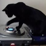 DJ黒猫本気のプレイ、デジタルタンテのピッチも変える