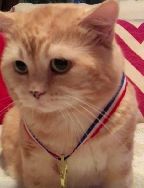 160820olympic 459x600 - モフリンピック金メダル、授与に戸惑う王者の茶猫